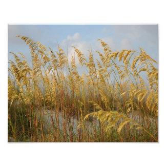 sea oats photographic print