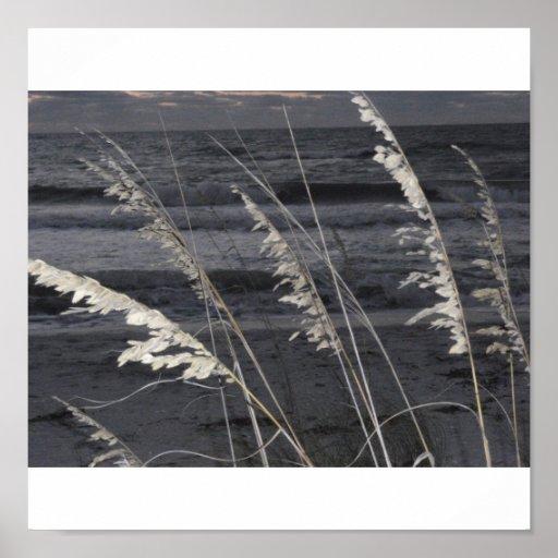 Sea oats posters
