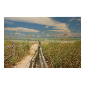 Sea oats Uniola paniculata) growing by beach Wood Canvases