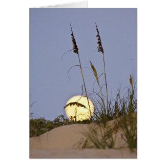 Sea Oats Uniola paniculata) growing on sand Greeting Card