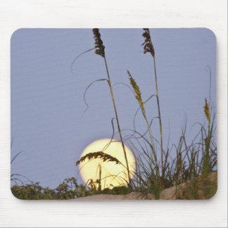 Sea Oats Uniola paniculata) growing on sand Mouse Pad