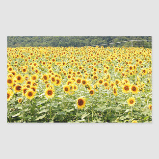 Sea of Sunflowers Rectangular Sticker