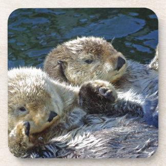 Sea-otters Coaster