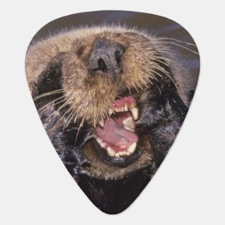 Sea Otters, Enhydra lutris 6 Guitar Pick