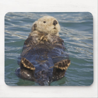 Sea otters play on icebergs at Surprise Inlet Mouse Pad