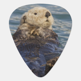 Sea otters play on icebergs at Surprise Inlet Plectrum