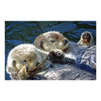 Sea-otters Stationery