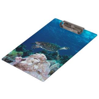 Sea Turtle Clipboard