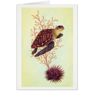 sea turtle with coral and urchin card