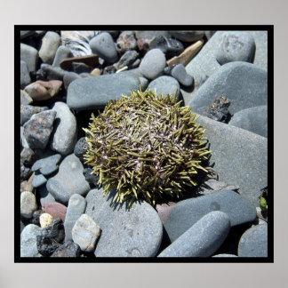 Sea Urchin 1 Poster