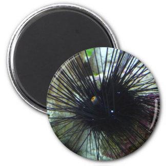 sea urchin 6 cm round magnet