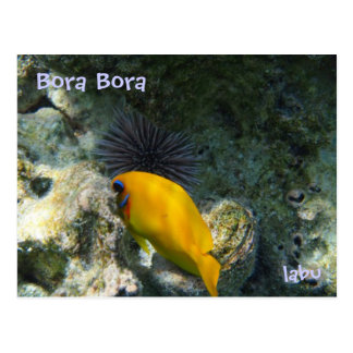 Sea urchin and tropical fish postcard