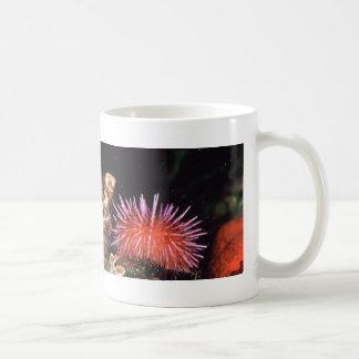 Sea Urchin Basic White Mug