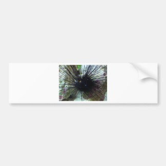 sea urchin bumper sticker