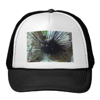 sea urchin cap