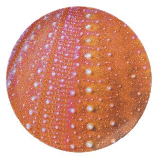 Sea Urchin-Coral Dinner Plate