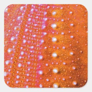 Sea Urchin-Coral Square Stickers
