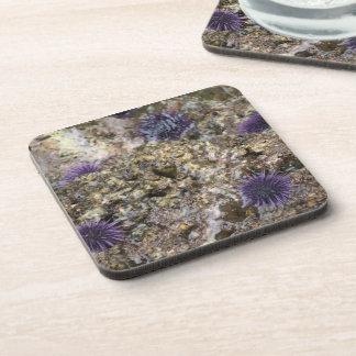 Sea Urchin Drink Coaster
