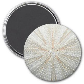 Sea Urchin Fridge Magnet - Round