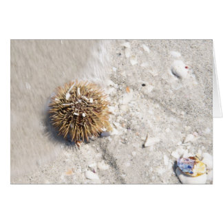 Sea Urchin in the Surf Greeting Card