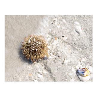 Sea Urchin in the Surf Postcard