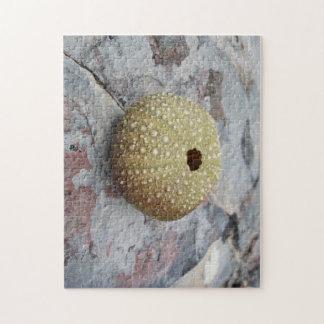 Sea Urchin Puzzle