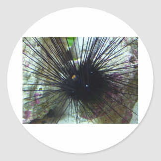 sea urchin round sticker