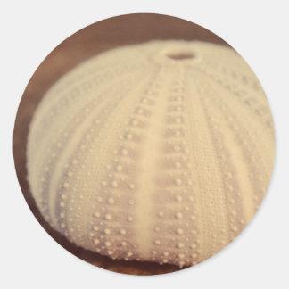 Sea Urchin Round Sticker