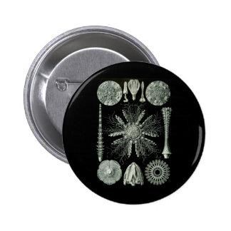 Sea Urchins 6 Cm Round Badge