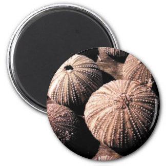 Sea Urchins 6 Cm Round Magnet