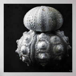 Sea Urchins B&W Poster