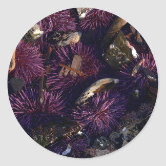 Sea Urchins Classic Round Sticker