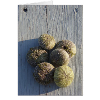 Sea urchins notecard