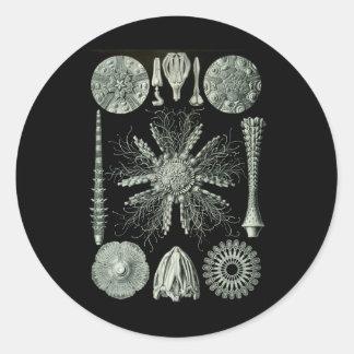 Sea Urchins Round Sticker