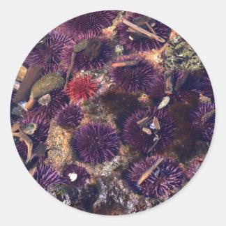 Sea Urchins Round Stickers