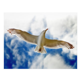 Seagull gliding in flight close up with blue skies flyer