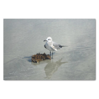 """Seagull with Seaweed 10"""" X 15"""" Tissue Paper"""