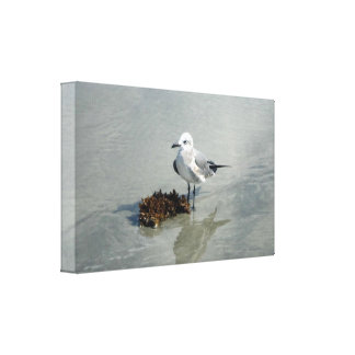 Seagull with Seaweed Canvas Print