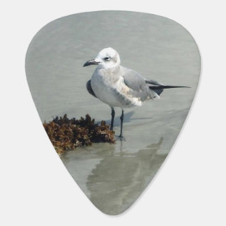 Seagull with Seaweed Guitar Pick