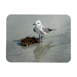 Seagull with Seaweed Rectangular Photo Magnet