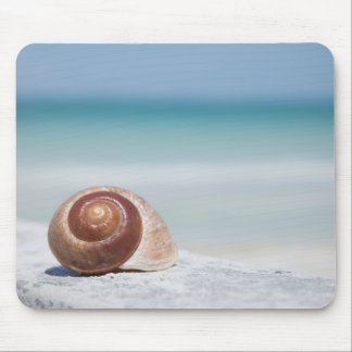 Seashell | St. Petersburg, Florida Mouse Pad