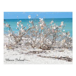 Seashell Tree on Marco Island Postcard