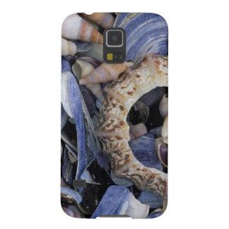 Seashells, Cape Town, Western Cape Galaxy S5 Cover