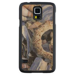 Seashells, Cape Town, Western Cape Maple Galaxy S5 Case