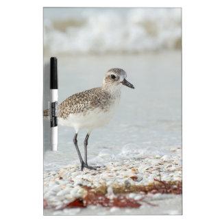 Seaside Plover Dry Erase Board