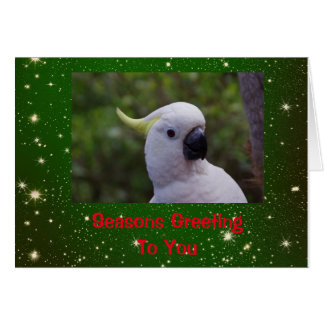 Seasons Greeting Holiday Card with Cockatoo Parrot