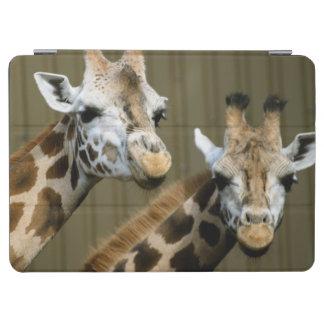 Seattle, Washington. Two giraffes iPad Air Cover