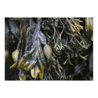 Seaweed. 13 Cm X 18 Cm Invitation Card