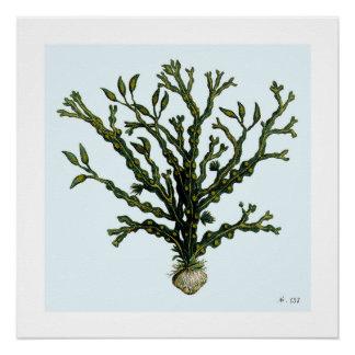 Seaweed #152 poster