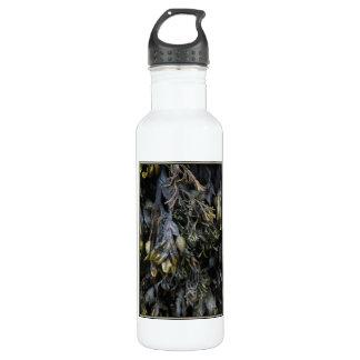 Seaweed. 710 Ml Water Bottle